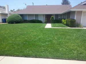Best Residential landscaper company in Hope Ranch