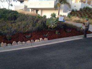 Lawn care agency in santa Barbara-SB Evolution Landscape