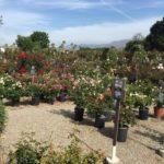 Plants for Landscape Project-SB Evolution Landscape
