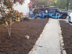 Landscaping Contractor in Santa Barbara-SB Evolution Landscape