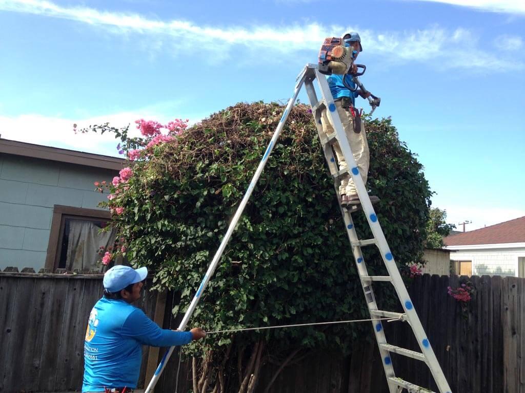 Landscaper in Santa Barbara | SBEvolution Landscape
