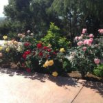 Fertilization of Plants | Landscapers Santa Barbara
