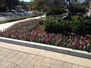 Landscaping in Courtyard Marriot-sbevolutionlandscape
