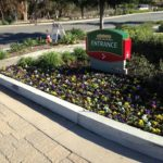 Landscaping Maintenance in Courtyard Marriot-sbevolutionlandscape