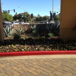 Landscaping in Courtyard Marriot-sbevolution