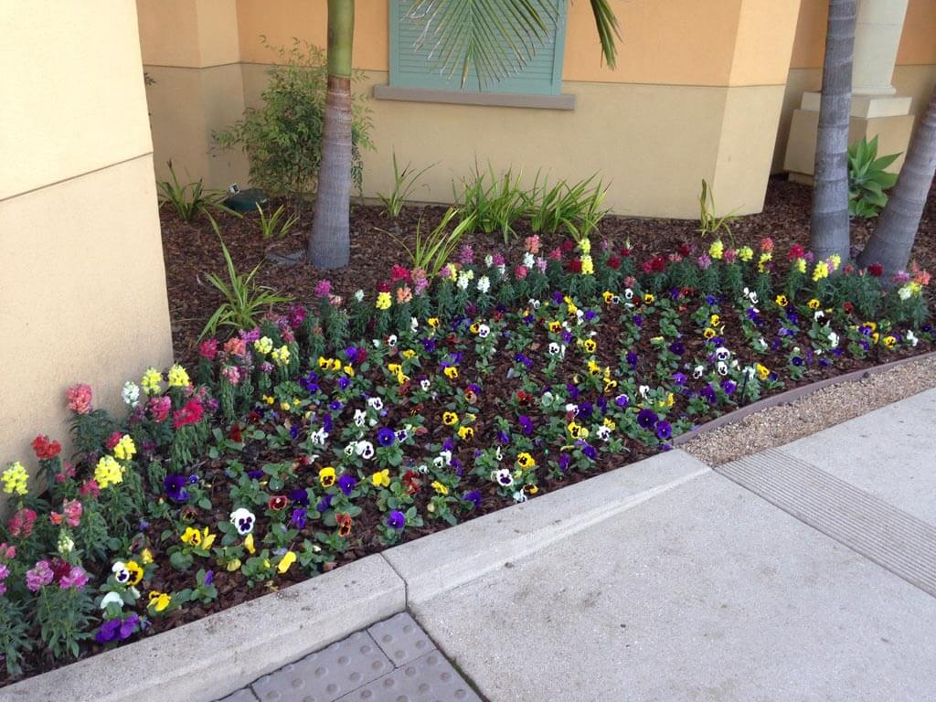 Landscaping in Courtyard Marriot | Gardeners Santa Barbara
