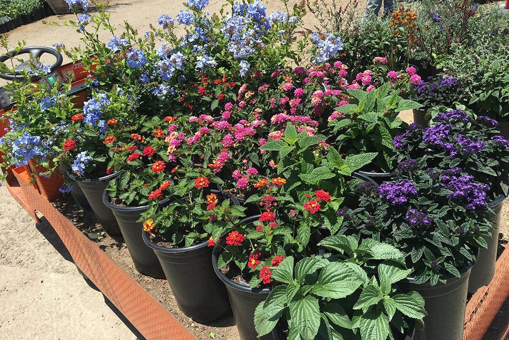 Gardeners tiny flowers likes