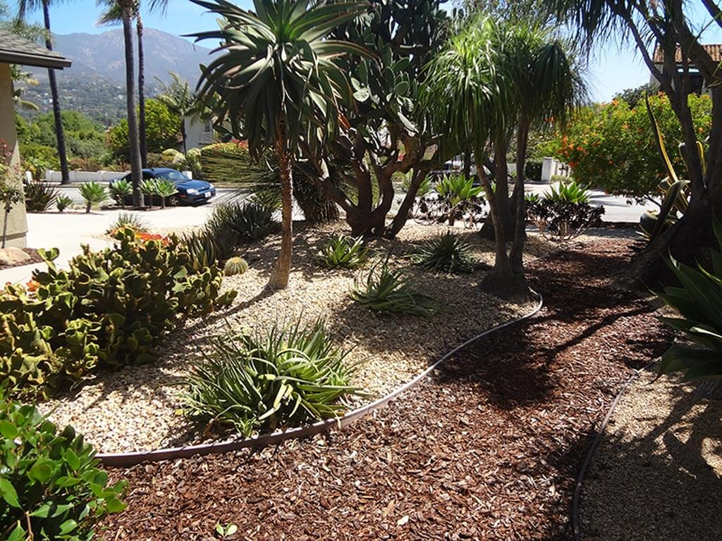 Santa Barbara Native Plant Garden | Landscapers Santa Barbara