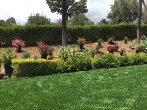 Santa Barbara Gardening project
