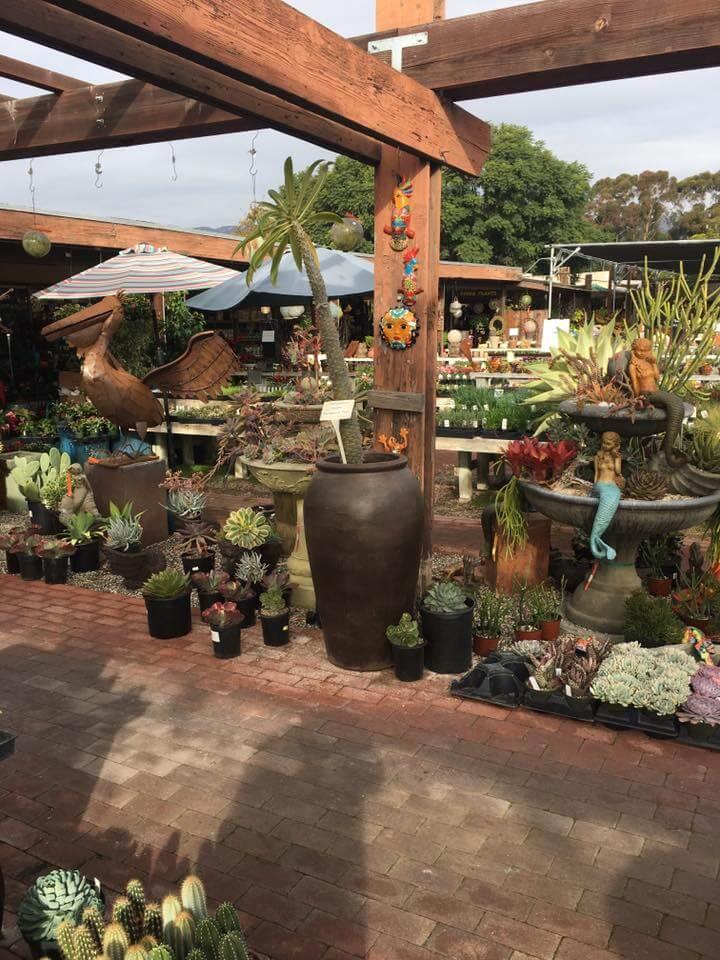 Succulents Plants | Landscapers Santa Barbara