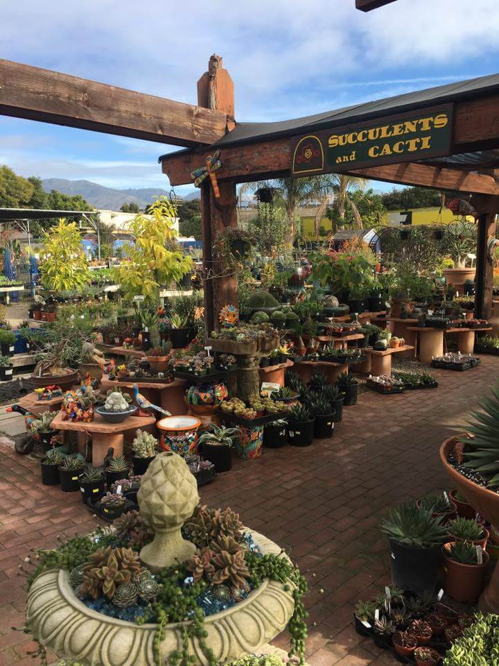 Drought tolerance Plants | Landscapers Santa Barbara