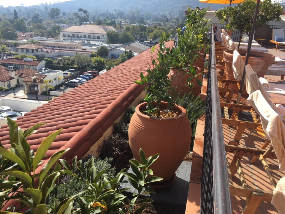 Gardening at Kimpton Canary Hotel in downtown Santa Barbara | Gardeners Santa Barbara