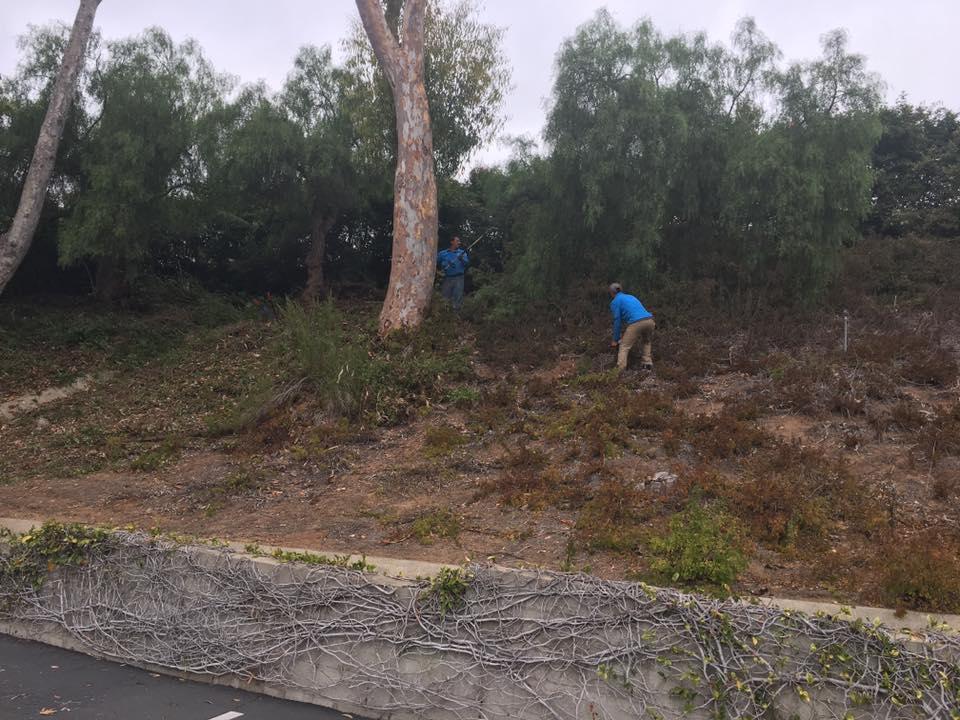 Garden weeds removal | Landscapers Santa Barbara