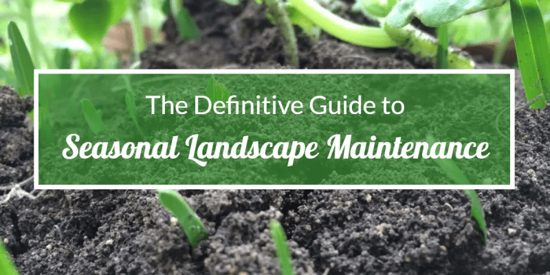 The Definitive Guide to Seasonal Landscape Maintenance