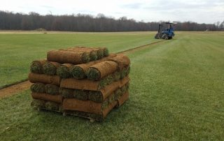 Installing New Sod - What You Need to Know